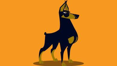 Hukum mmelihara anjing